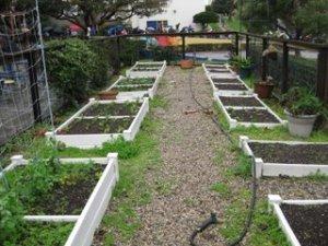 Samohi garden beds with walkway