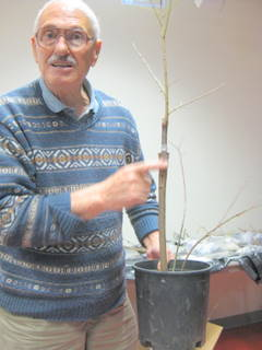 Dan Bayer with grafted tree